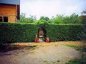 Живые стены