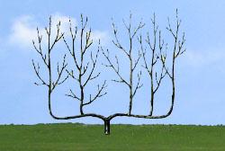 Сланцево-кустовидная гребневидная шпалера