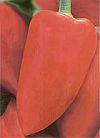 Перец сладкий. Винни-пух