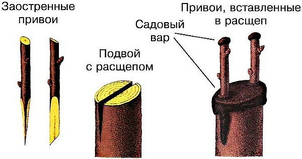 privyabl4
