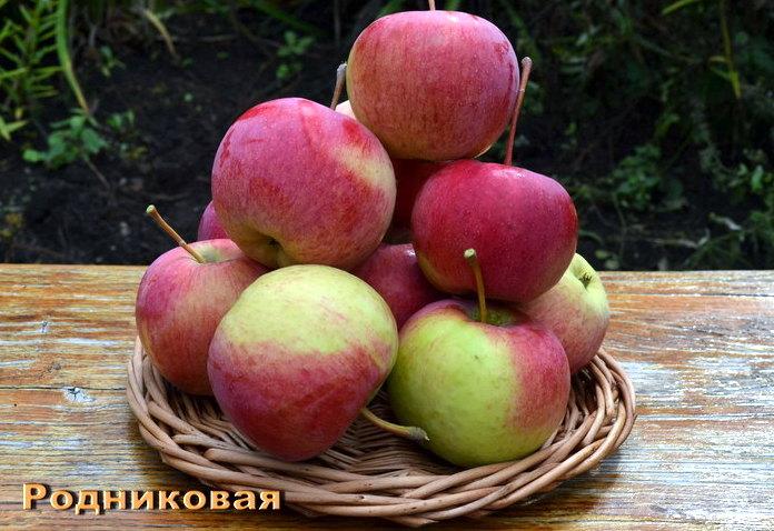 Родниковая Свердловские сорта яблонь